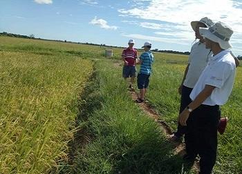 Gạo sạch canh tác tự nhiên Triệu Phong chính thức đạt tiêu chuẩn hữu cơ