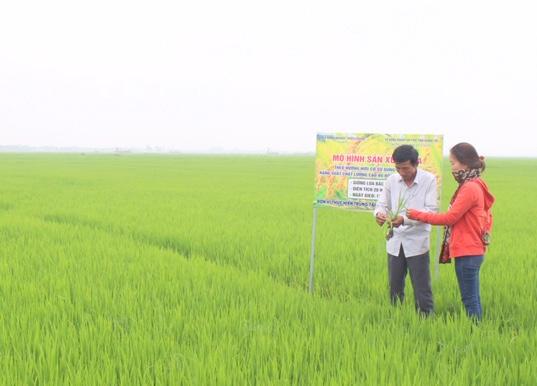 Hợp tác xã Triệu Phong - Quảng Trị được TQC chứng nhận hữu cơ cho sản phẩm Gạo