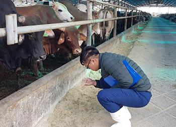 TQC đánh giá chứng nhận VietGAHP chăn nuôi tại 3 cơ sở chăn nuôi thuộc tập đoàn Hòa Phát