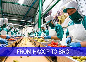 Hướng dẫn Nâng cấp chuyển đổi HACCP sang BRC