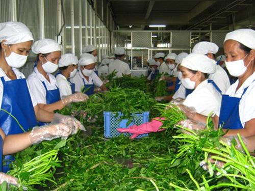 Quy trình vận chuyển, xử lý, sơ chế và chế biến thực phẩm theo phương pháp hữu cơ