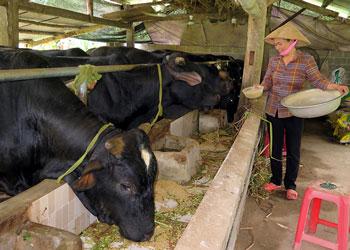 Thông tin về Tiêu chuẩn cơ sở thức ăn chăn nuôi