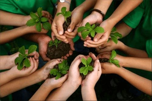 Quy trình trồng rau hữu cơ, củ quả, ngũ cốc hữu cơ, trái cây hữu cơ