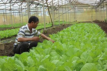 Kinh nghiệm áp dụng VIETGAP hiệu quả tại trang trại
