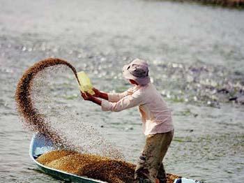 Chứng nhận chất lượng sản phẩm thức ăn thủy sản