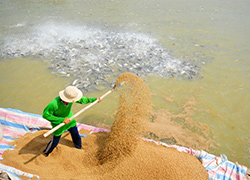 Chứng nhận hợp quy thức ăn thủy sản – Hỗ trợ công bố lưu hành tại Chi cục Thủy sản, Sở nông nghiệp hoặc Tổng cục Thủy sản