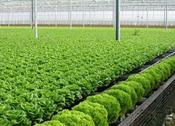 Chứng nhận VietGAP sản phẩm trồng trọt