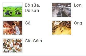 Dịch vụ Chứng nhận VietGAP Chăn nuôi gia cầm, gia súc: Lợn/heo, Gà, Bò …