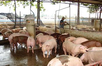 VietGAP Chăn nuôi là gì? Các yêu cầu khi thực hiện sản xuât theo Tiêu chuẩn VietGAP Chăn nuôi