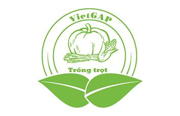 Chứng nhận VietGAP trồng trọt